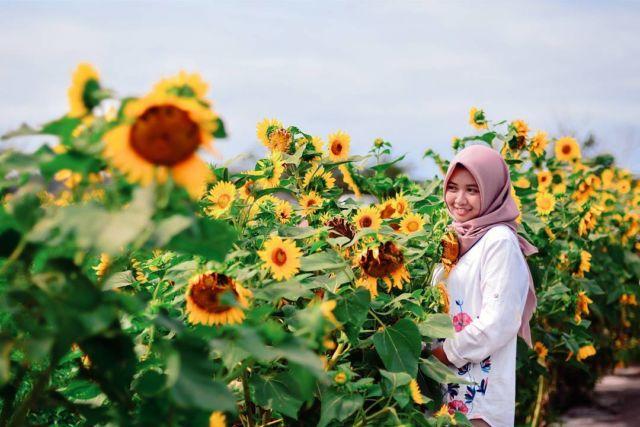 kebun matahari bantul